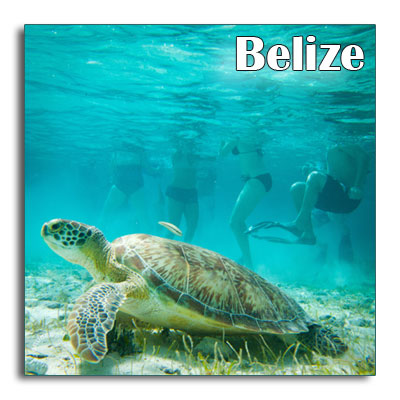 Belize-turtle