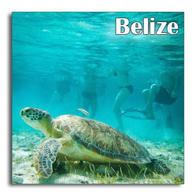 Belize-turtle