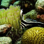 Underwater life at one of the great honeymoon destinations in Bonaire.