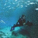 Scuba dive in Bonaire's Harbour Village.